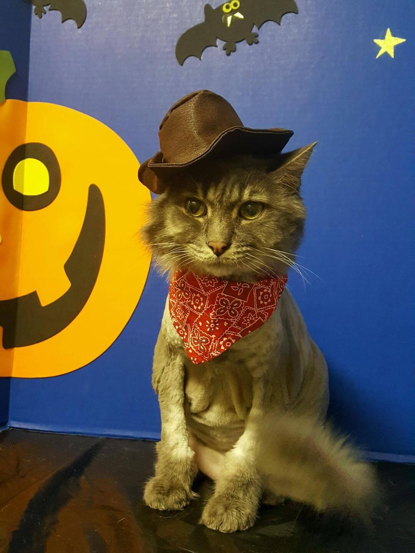 Hat Kitty