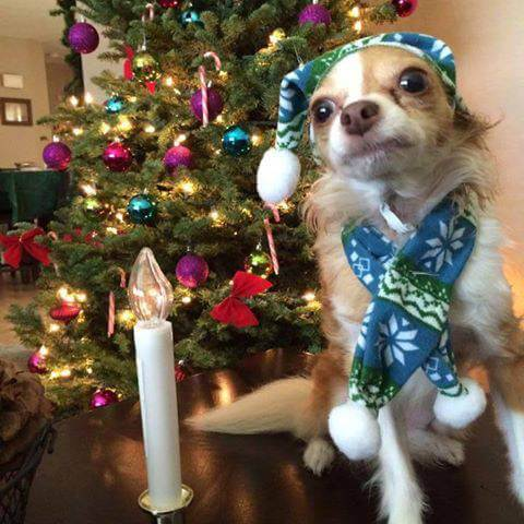 Small Dog and Christmas Tree