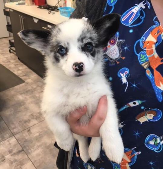 Puppy in Reception