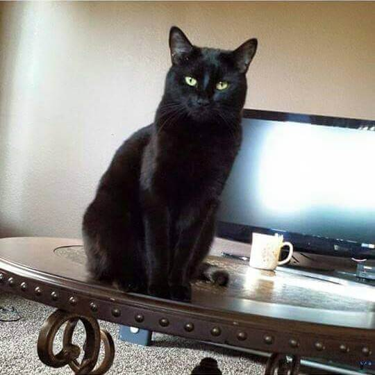 Black Cat Sitting on Table